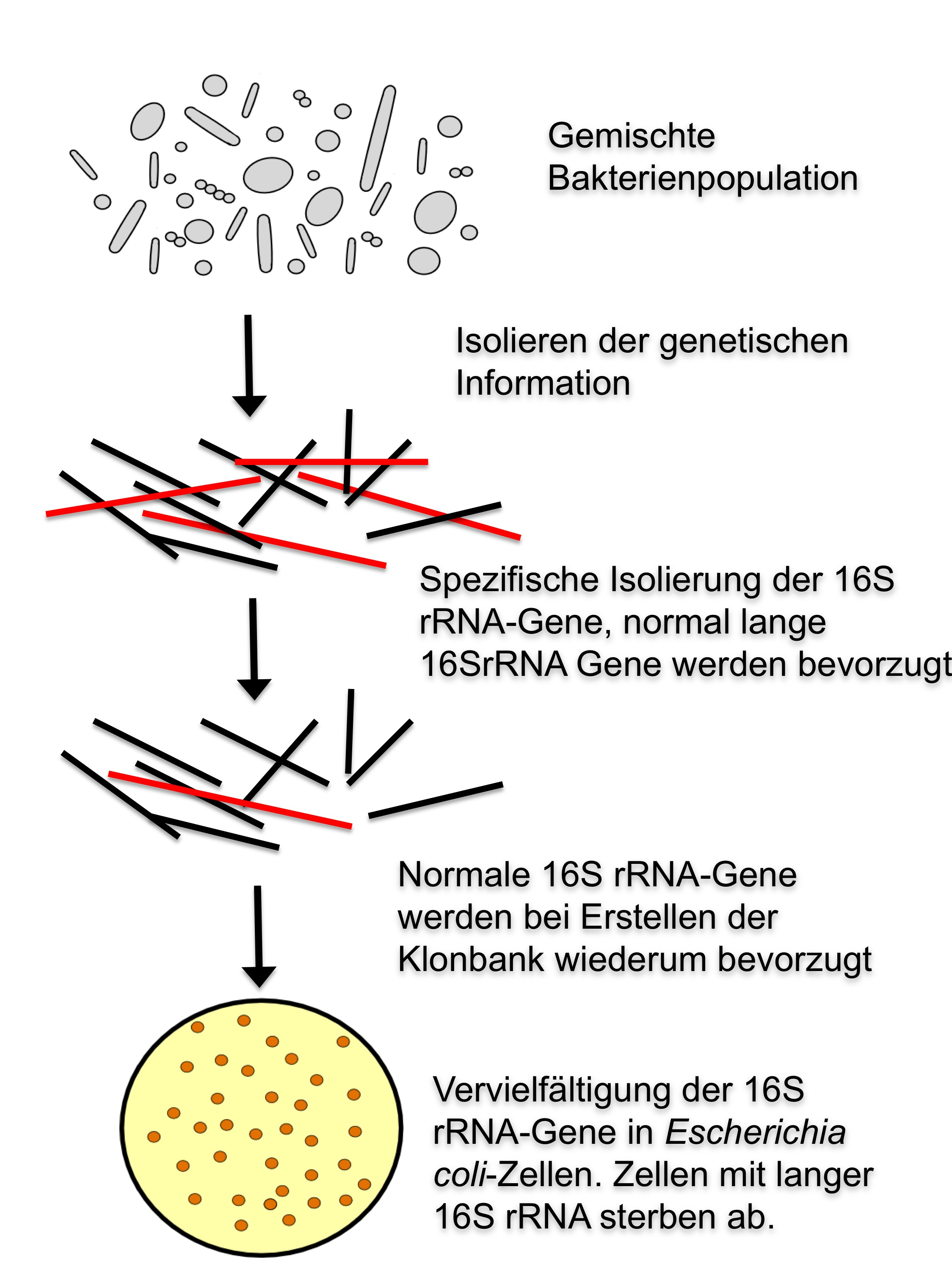 28022012 introns found in bacterial 16s rrna