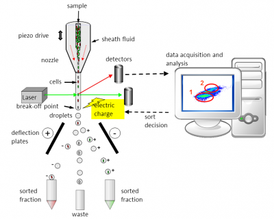 Principle of a Flow Cytometer