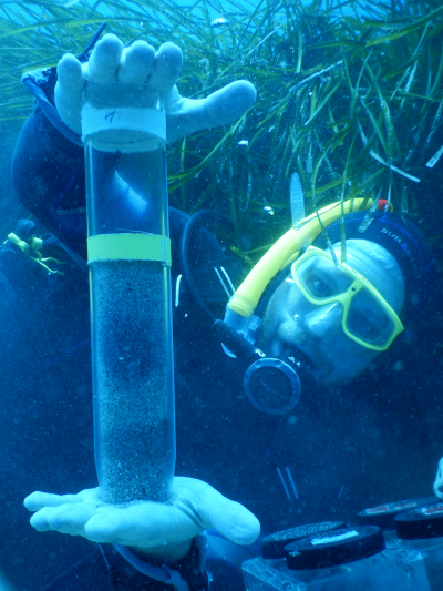 Harald Gruber-Vodicka from the Max Planck Institute in Bremen in the field nearby the seabed in which Paracatenula lives with its bacterial symbionts. The researchers collect such sediment cores in sea grass meadows off the Mediterranean island of Elba. © Manuel Kleiner