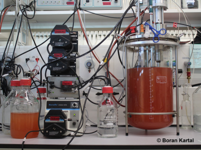 Microbes can grow on nitric oxide (NO)